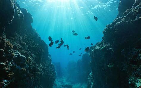 Surprising Facts   Ocean Floor Greentumble