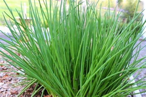 Que Planter En Septembre by Que Planter En Septembre 15 Id 233 Es 224 Semer Et 50 Photos
