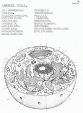 microbiology coloring book animal cell coloring page to print az coloring pages