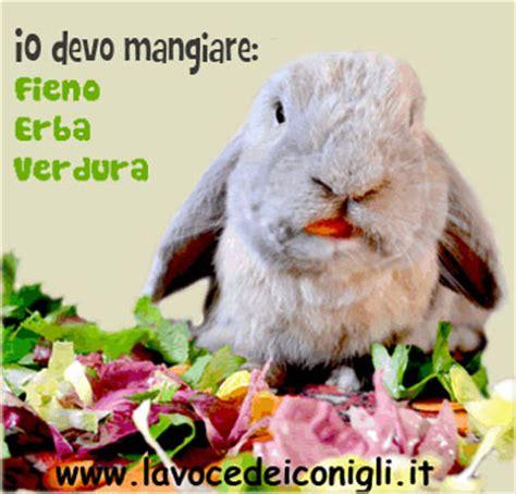 alimentazione forzata coniglio alimentazione