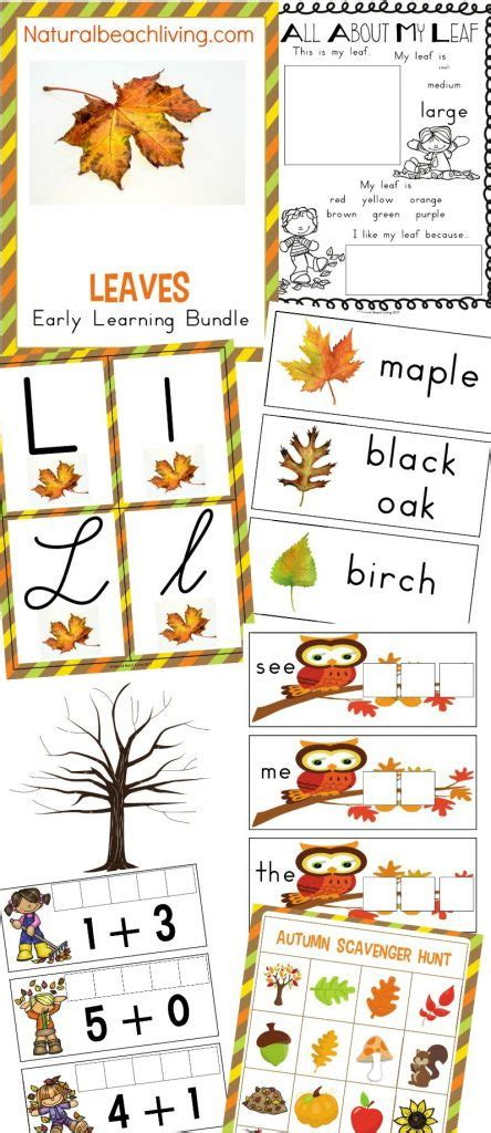 why use themes in kindergarten leaf lesson plan ideas for preschool theleaf co