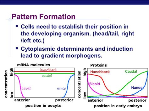pattern formation formation development ppt video online download