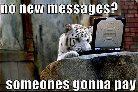 Funny Tiger Memes - tiger funny animal humor photo 20319004 fanpop