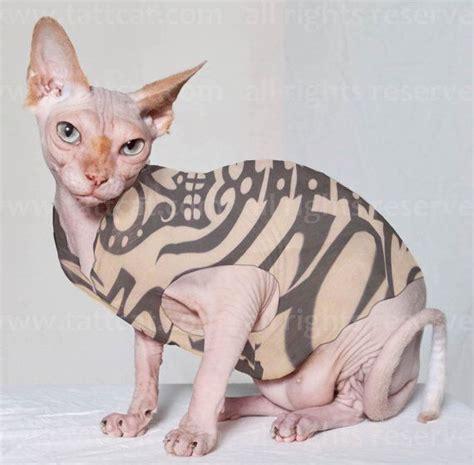 tattooed hairless cat the sugar skeleton tattcat inspired sphynx cat