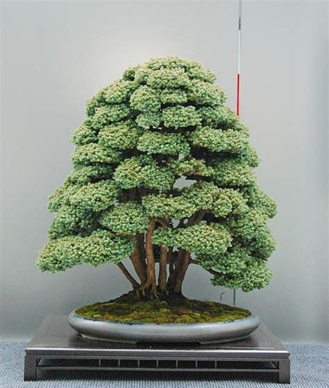 Bonsai Baum Kaufen 38 by You Re Sure To Feel Zen After You See These 51 Stunning Bonsai