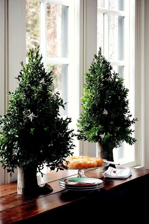 boxwood tabletop christmas tree create tabletop trees from garden greenery houston grows