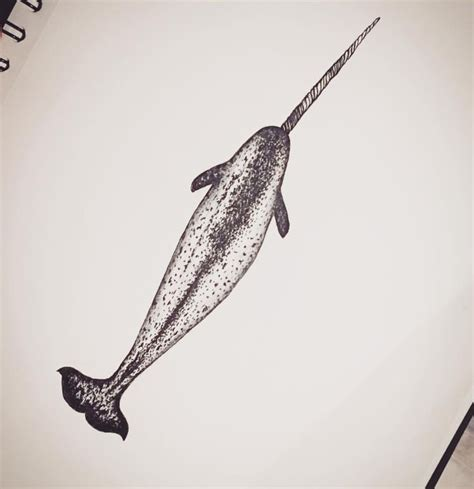 narwhal tattoo 25 best ideas about narwhal on whale
