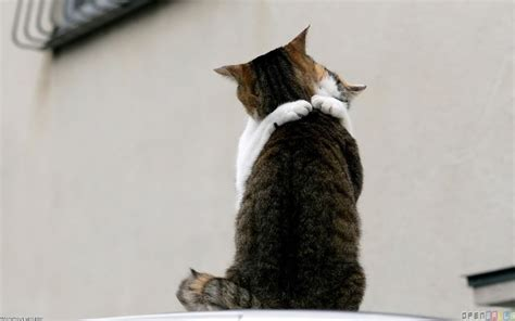 wallpaper cat love cats love wallpaper 19264 open walls