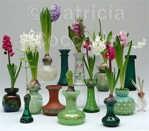 Crocus Bulb Vase by The Curious History Of The Bulb Vase Hyacinth Vase Tulip