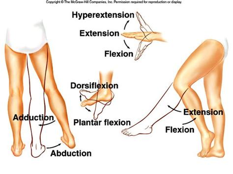 Flexi On flexion vs extension occur at joints flexion extension