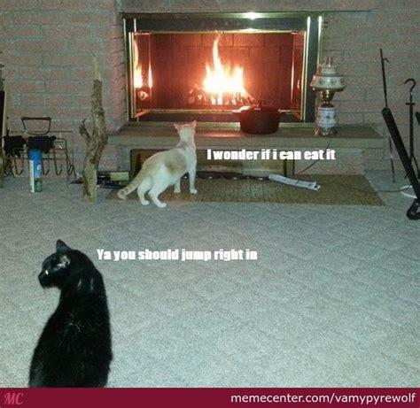 Dat Ass Cat Meme - a cat who has never seen fire before by vamypyrewolf