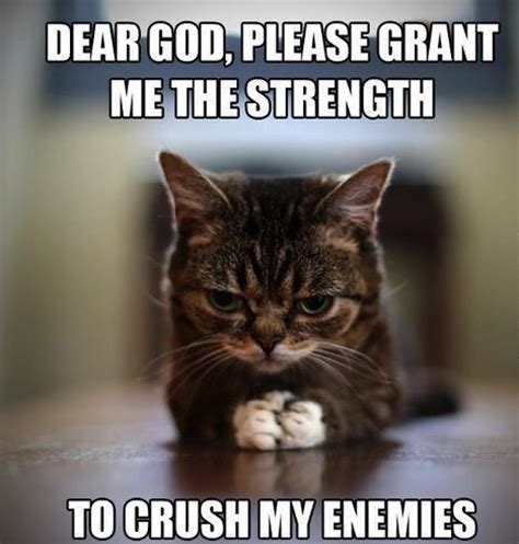 Cute Cats Memes - cat memes 25 cute and funny cat memes badass memes com