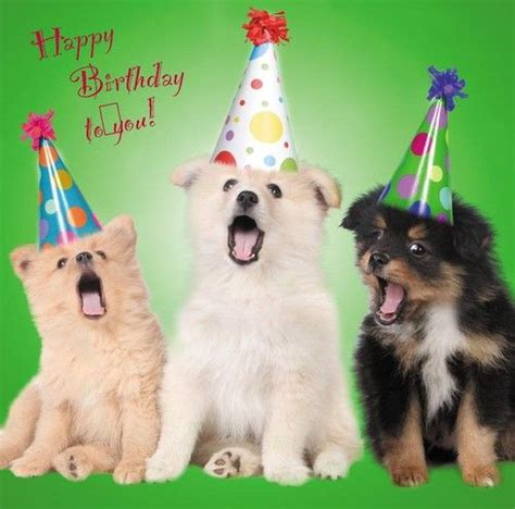 puppies happy birthday details about happy birthday blank greetings card dogs puppies quot lots of designs