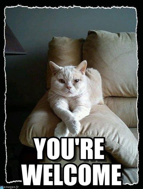 You Are Welcome Meme - you re welcome meme pictures to pin on pinterest pinsdaddy