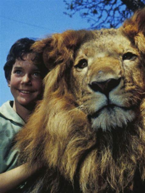 film lion sinopsis the lion 1962 jack cardiff synopsis characteristics