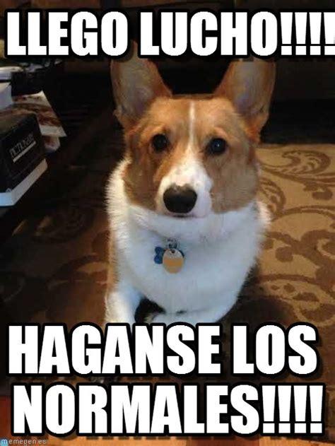 imagenes graciosas lucho memes chistosos de perros imagenes chistosas