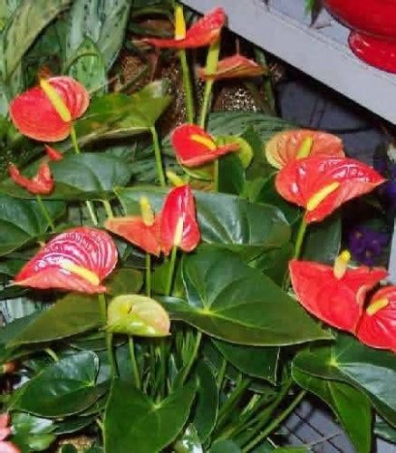 foto piante d appartamento piante da appartamento archives genius wellness