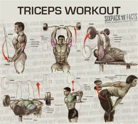the best workout program the best triceps workout plan healthy fitness