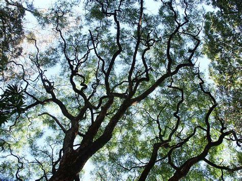 free tree bark stock photo freeimages com