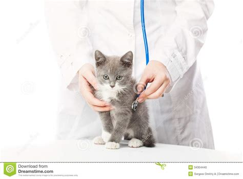 vet with stethoscope and kitten stock photo image 34304440