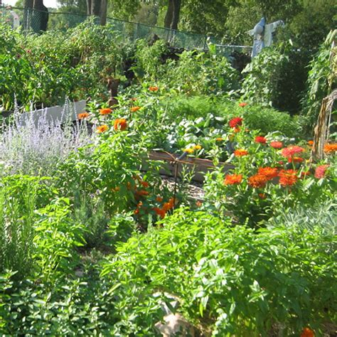 Permaculture Gardening by Daylilies In Australia Permaculture No Dig Gardening