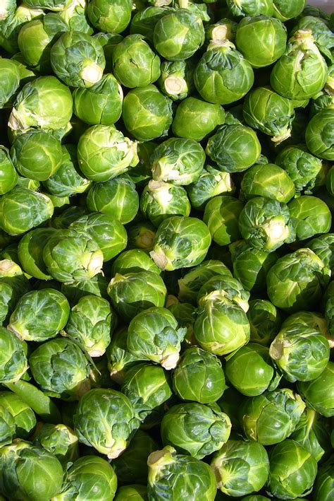 brussel sprout plant