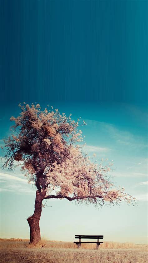 tree bench smartphone hd wallpapers getphotos