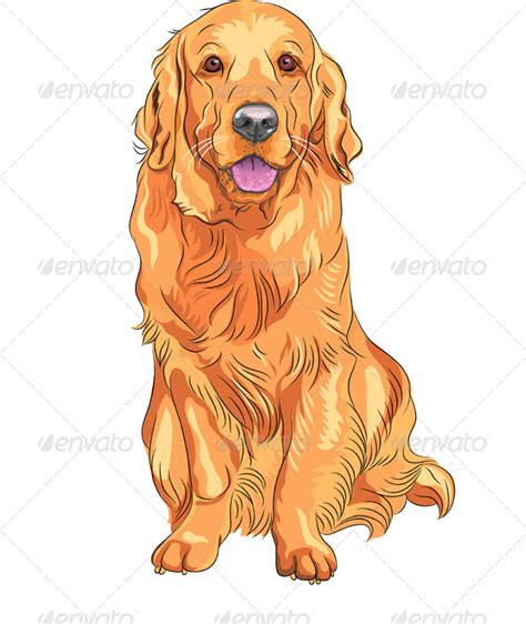 golden retriever character vector breed golden retriever sitting graphicriver