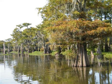 airboat louisiana sw tours henderson sw