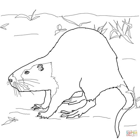 nutria rat coloring page free printable coloring pages