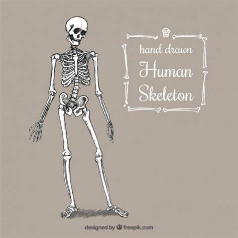 tir 233 par la squelette humain t 233 l 233 charger des