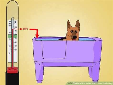 dish soap for fleas on puppies 2 easy ways to kill fleas with dishsoap wikihow