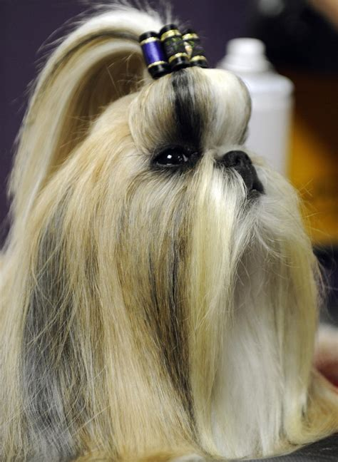 haircuts for long hair dogs dressed to the ca nines 9 dog hairstyles for the stylish