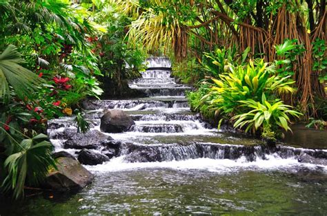 costa rica  country  beautiful nature  species