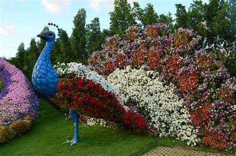 Mishmreow Travel Dubai Miracle Butterfly Garden Flowers In The Garden Of