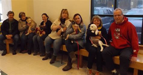 puppy socialization class pet page veterinarians in clio clio animal hospital