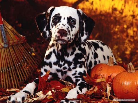 cute dogs alert pics   happy thanksgiving cheer  dogs eat