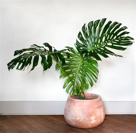 Plants Easy To Grow Indoors | the easiest indoor plants to grow in house artdreamshome