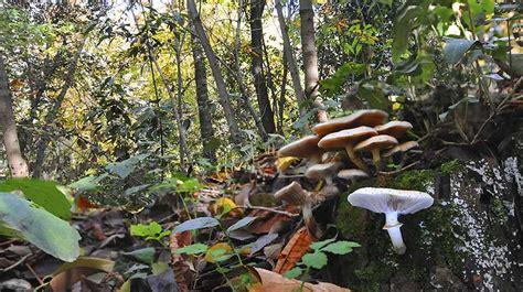 fotos setas invierno la alhambra isla ecologica en waste magazine