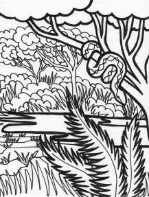 Rainforest animal coloring page boa snake rainforest animal coloring