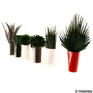 plante verte exterieur sans entretien photos de