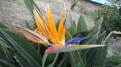 bloem vogelbek vogelbek bloemen pinterest bloemen en planten