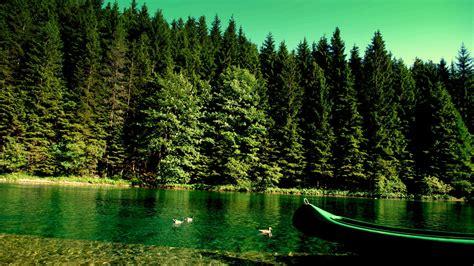 imagenes de bosques otoñales заставки лес 1600x900 для рабочего стола скачать
