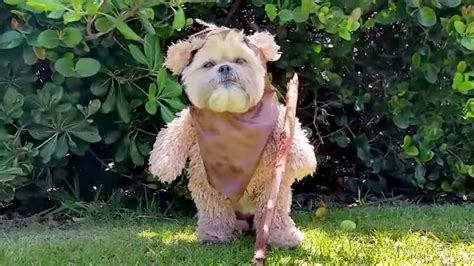 ewok puppy wars fans munchkin the s ewok impression is a must see today