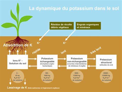 fruits w potassium top 10 foods rich in potassium high potassium fruits and