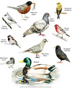 guide to common birds