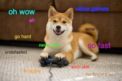 Wow Dog Meme - aggroe anemone sega genesis adventures and charmander d