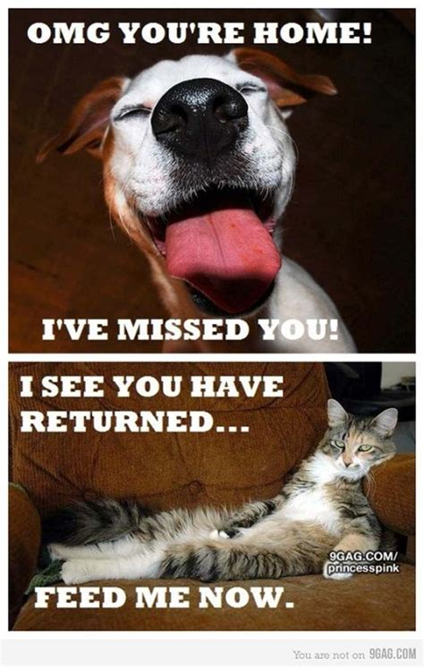 49 best lol cats 3 images on pinterest funny animals