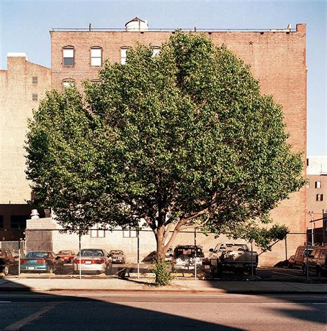 city tree required reading new york city of trees by benjamin swett
