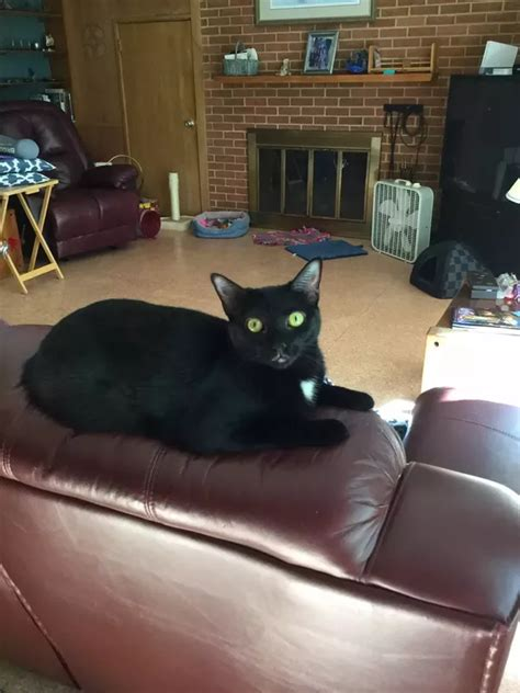 Loyola Mba Quora by Are Black Cats Usually More Aggressive Than Other Cats